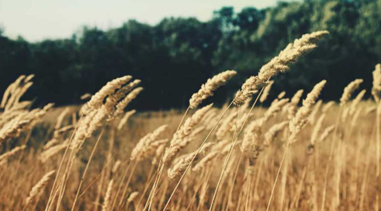 Genesis Grain & Fertilizer