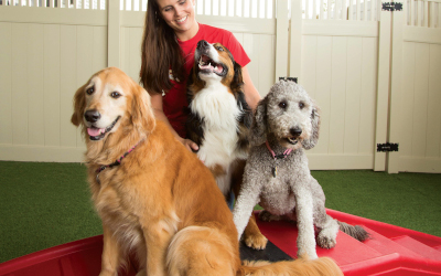 A Camp Bow Wow Counselor sits with three dogs in front of her for some play time.